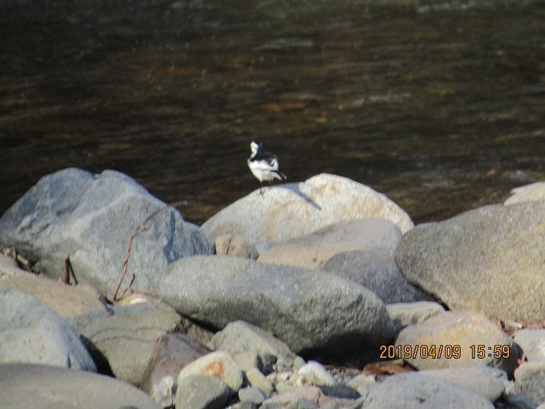 川辺の鳥2
