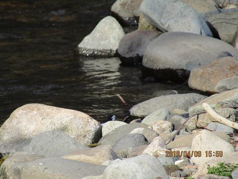 川辺の鳥1
