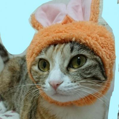 猫(ルナ)