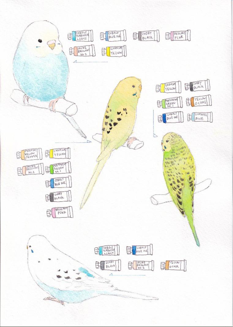 2019_鳥が好きだ_ (3)