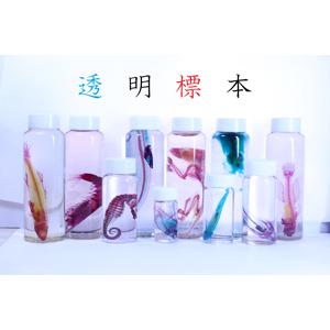 2019_透明屋パク_logo