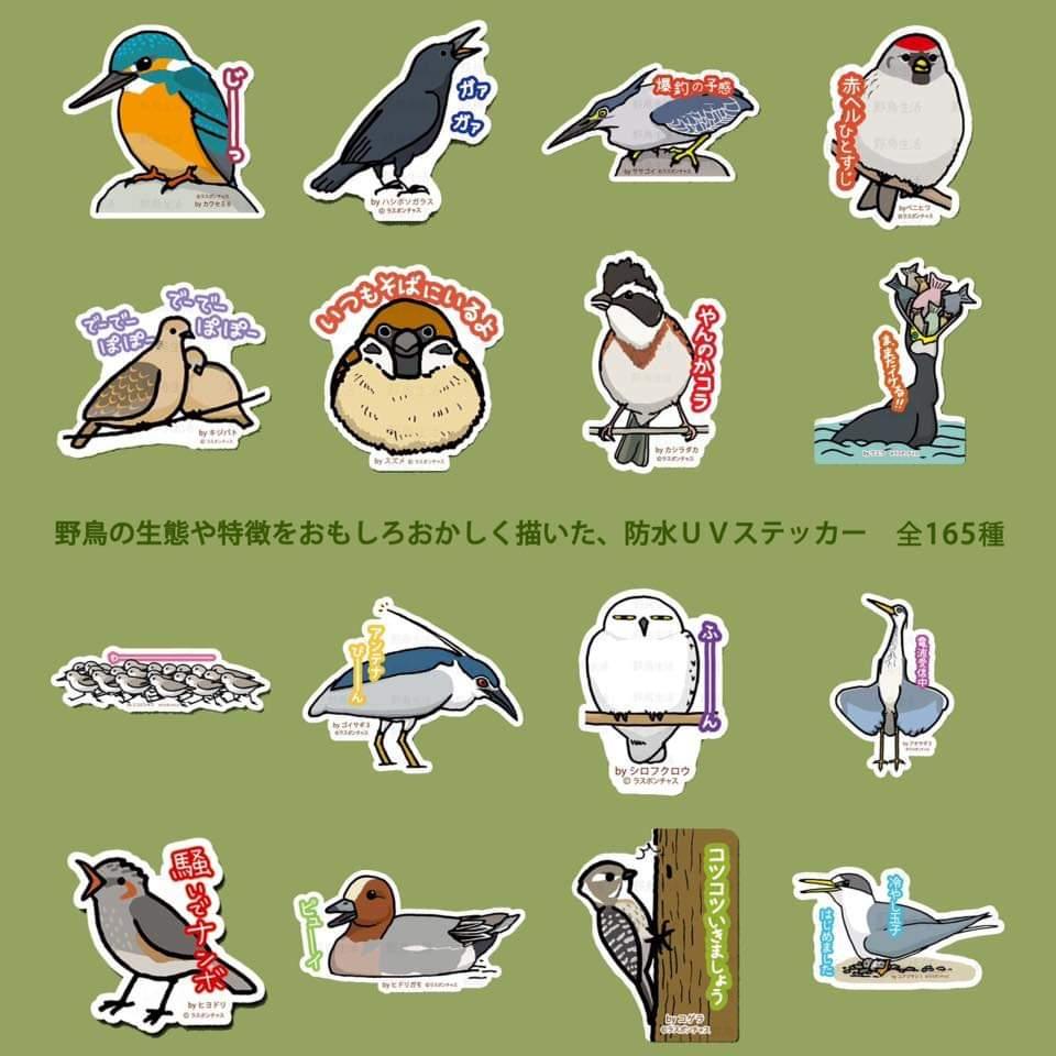 2019_野鳥生活_5