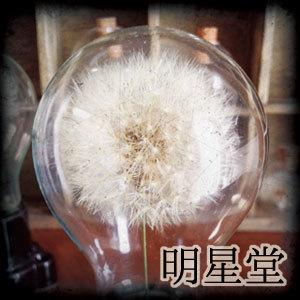 2019_明星堂_logo