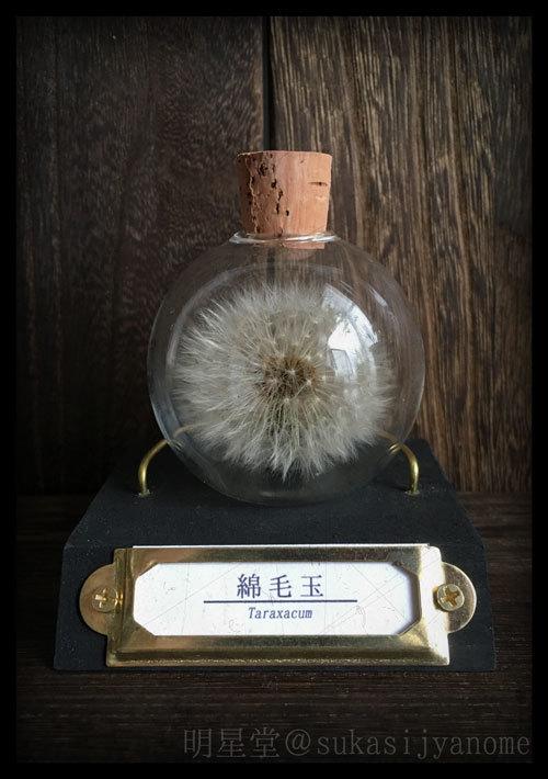 2019_明星堂_ (2)