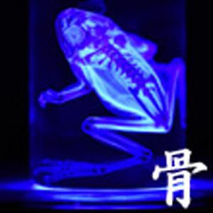 2019_骨_logo