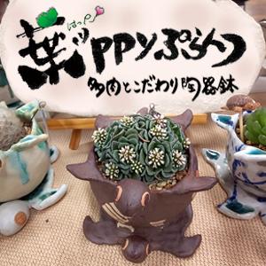 2019_葉ッppyぷらんつ~多肉とこだわり陶器鉢~_logo