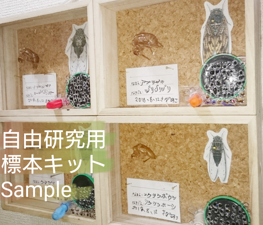 2019_そらみつ_7