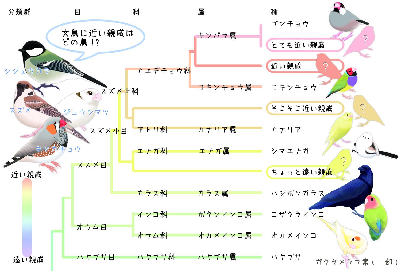 2019_花咲文鳥_1