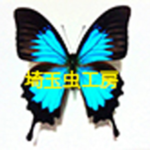 2019_埼玉虫工房_logo
