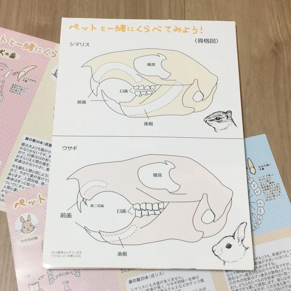 2019_ガクタメ_ぐろうえっぐ_ (1)