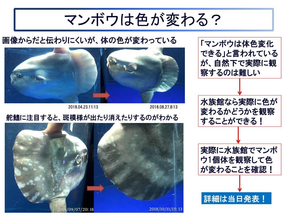 2019_ガクタメ_マンボウなんでも博物館_01