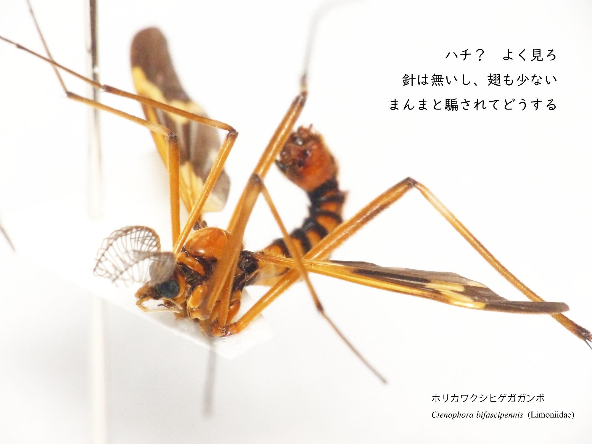 2019_ガクタメ_ニッチェ・ライフ_(2)