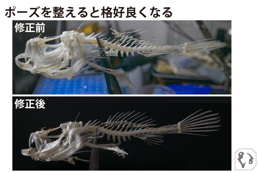 2019_ガクタメ_魚のホネも好き_ (1)