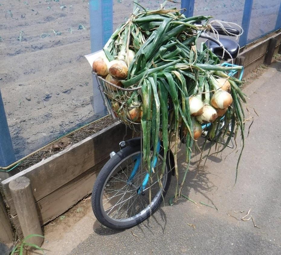 2019_ガクタメ_たった100種類の野菜しか作らない件_ (3)