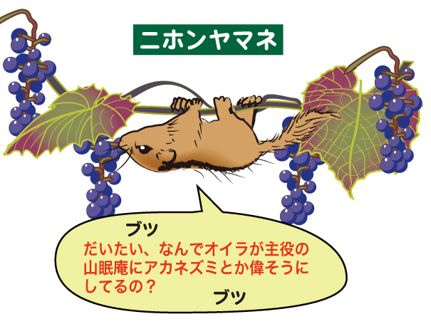 2019_ガクタメ_山眠庵(やまねあん)_ (2)