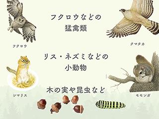 2019_ガクタメ_いきもの細密画アートグッズ