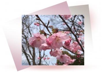 20190402桜A