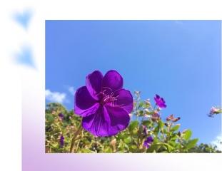 20190924紫花A