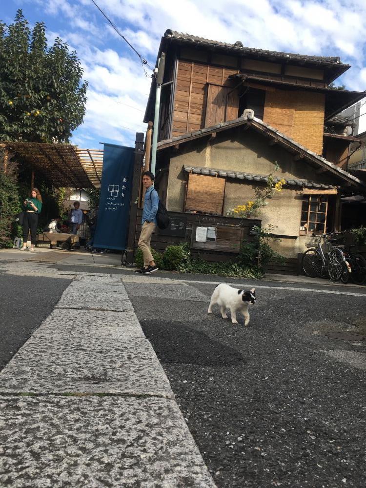 上野桜木あたり1