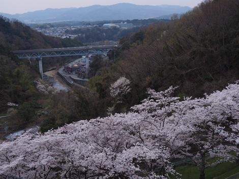 桜の風景♪
