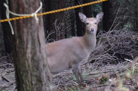 武甲山で出会った鹿