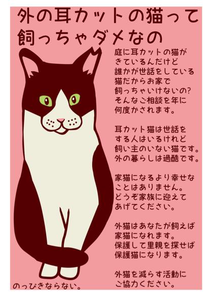 新耳カット猫完成 (1)