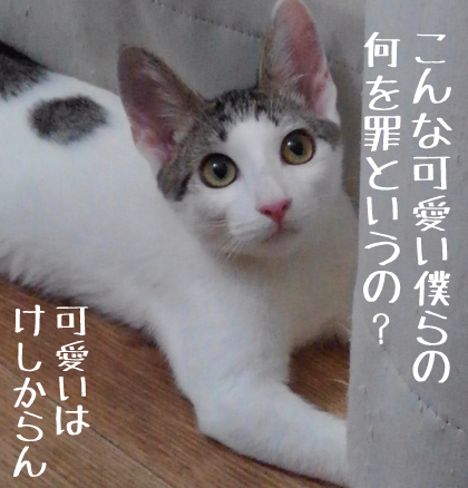 KIMG0289_01.jpg