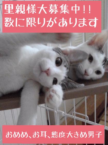 KIMG0324_01.jpg