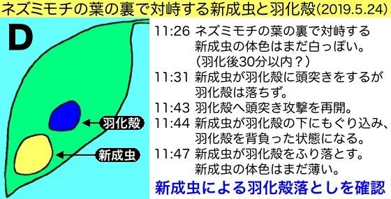 20羽化殻落D図