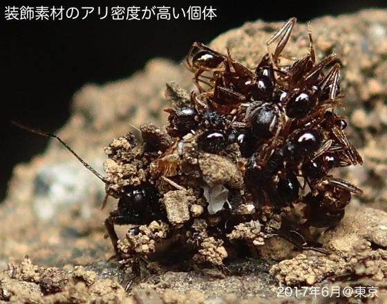 04針刺亀幼虫B1再