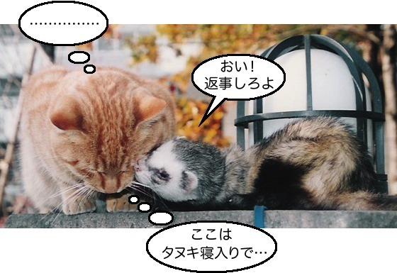 02猫&イタチ