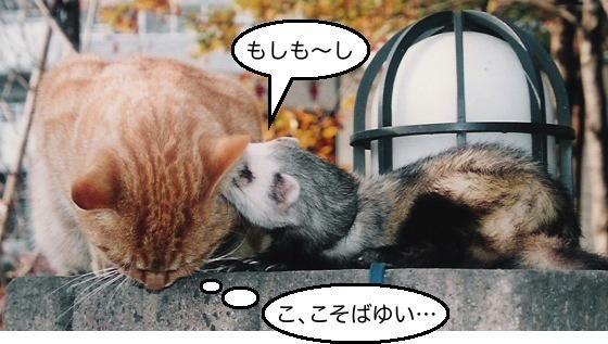 03猫&イタチ