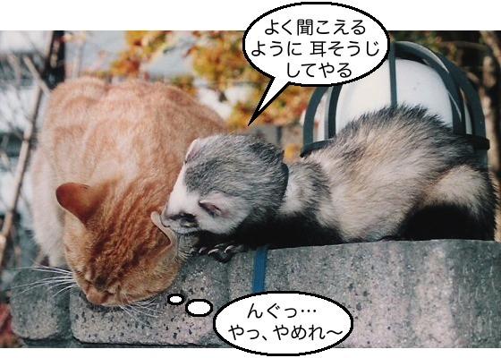 04猫&イタチ