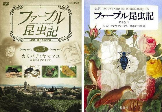 01昆虫記DVD本