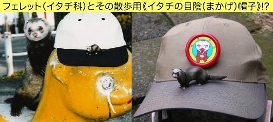 02鼬の目陰帽子