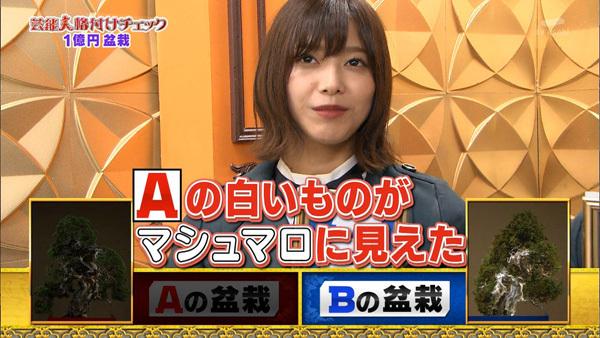 芸能人格付けチェック2019 欅坂46 盆栽1