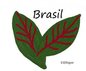 BRASIL①