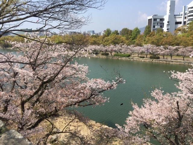 桜横からIMG_7199