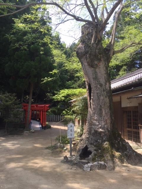 別の木IMG_7902