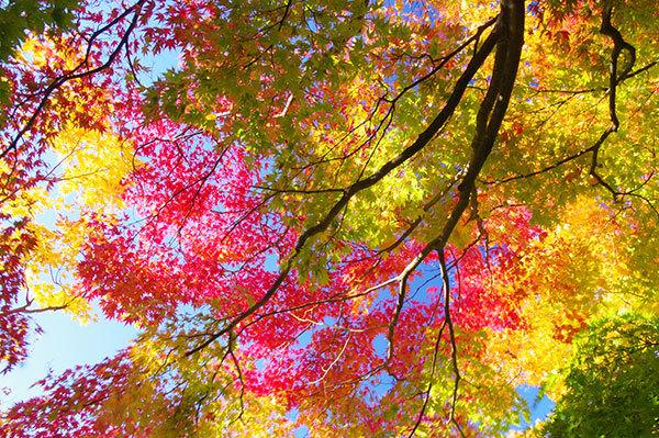 岩手公園の紅葉