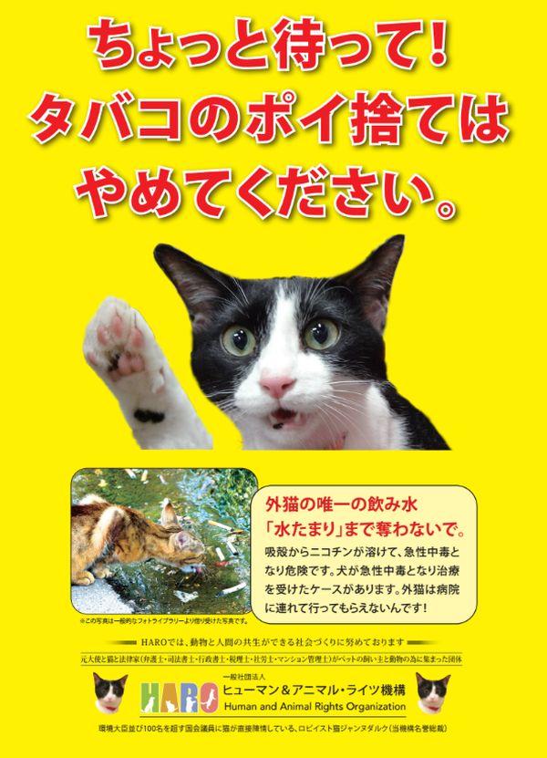 PNG ポイ捨て禁止 大写真猫たばこの水たまり 600