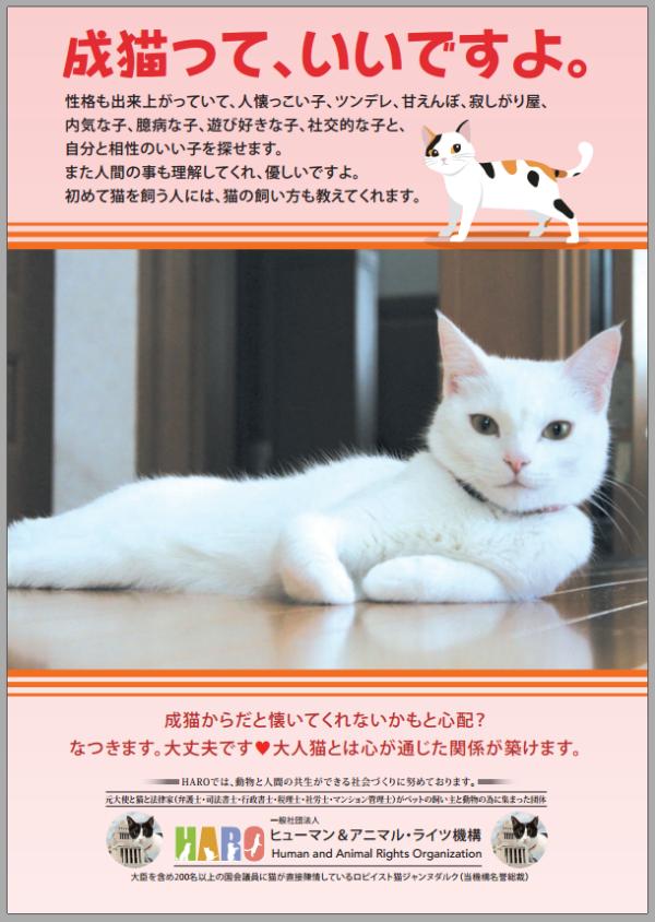 成猫っていいですよポスター 2019年3月27日 600