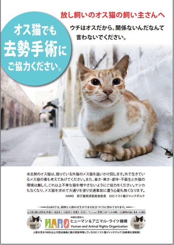 オス猫にも避妊去勢をお願いいたします。 600