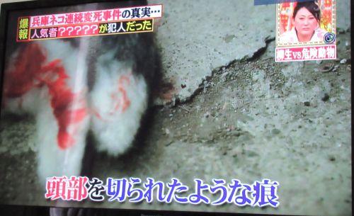 TV アライグマ 猫を殺す 頭部を切られたような痕 500
