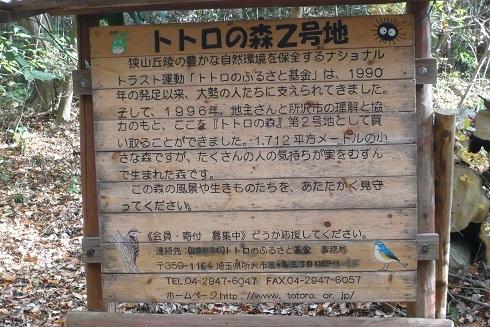 P1070005 トトロの森
