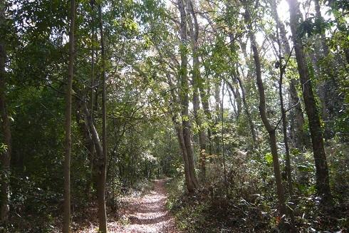 P1070016 雑木林1