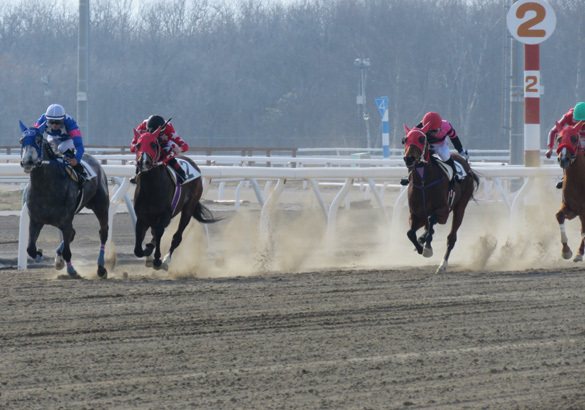 門別レース2