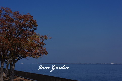 湖岸桜181108