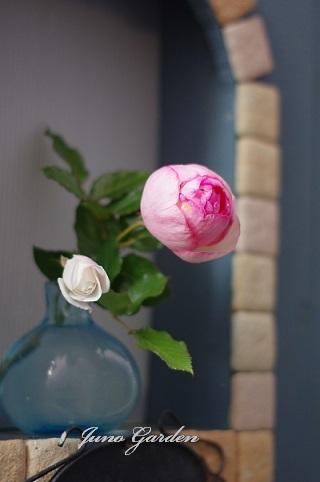薔薇181206