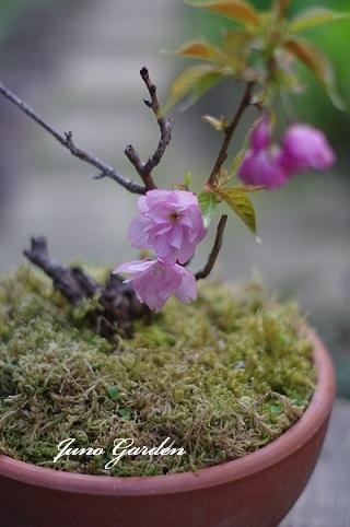 桜190410